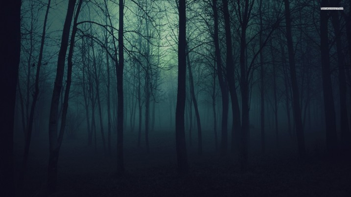 trees-in-the-forest-at-night-689-1920x1080